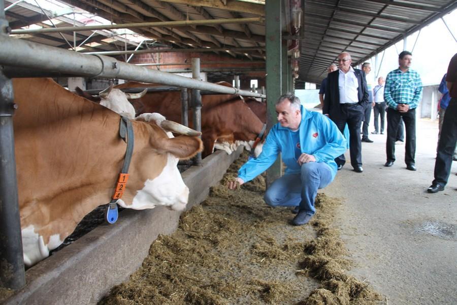 06.082014 posjeta ministra poljoprivrede, vodoprivrede i sumarstva farmi krava muzara Ledenicka dolina